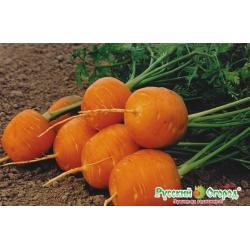 Семена. Морковь Полярная клюква (вес 1 г)