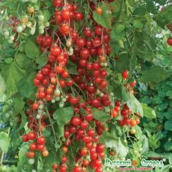 Семена. Томат Свит Черри, смесь (вес 0,1 г)